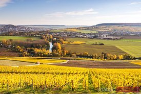 Vineyards, Marne valley, Champagne Ardenne, France