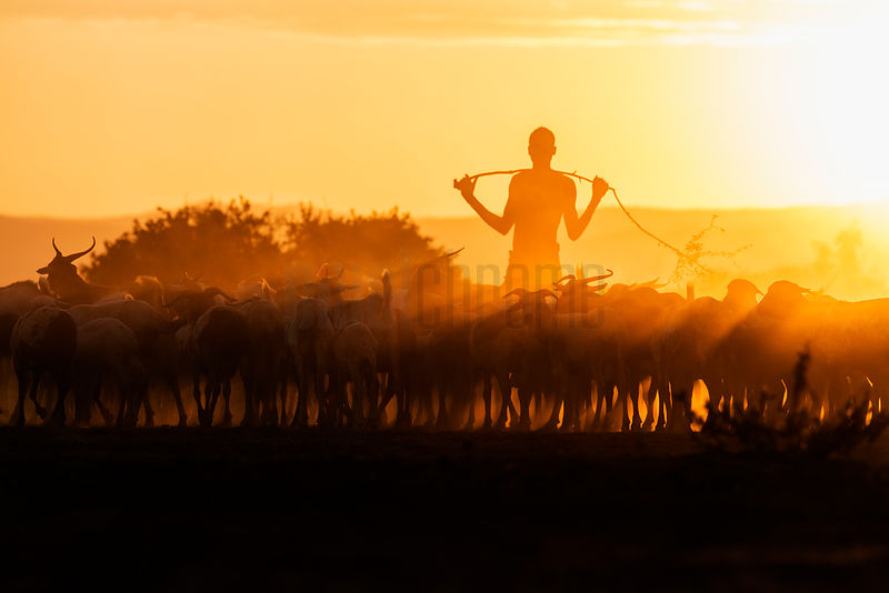 Herder from the Kara Tribe with his Goats