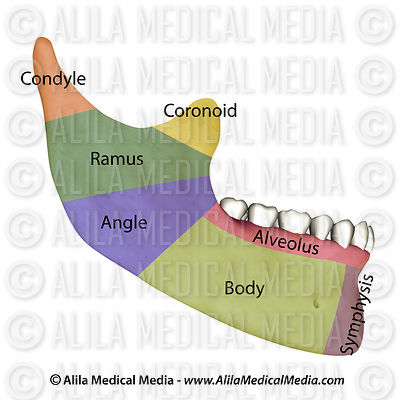Mandibular fracture classification