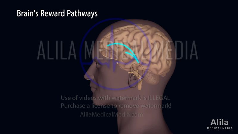 Dopamine and the brain reward pathways NARRATED animation