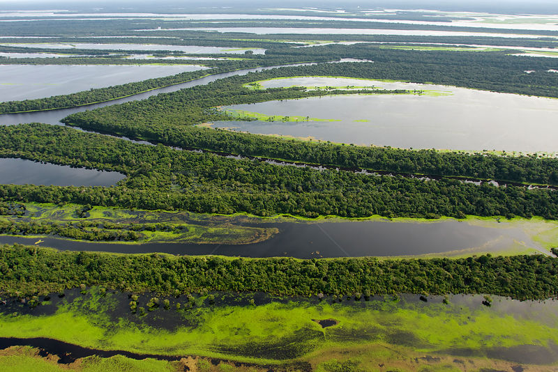 Aerial view of flooded forests, Anavilhanas Archipelago, Anavilhanas National Park,  Rio Negro, Amazonas, Brazil February 2011.