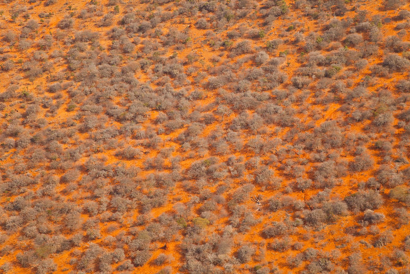 Aerial view of savanna landscape in the dry season, Rift Valley, Tanzania, Africa, August 2009