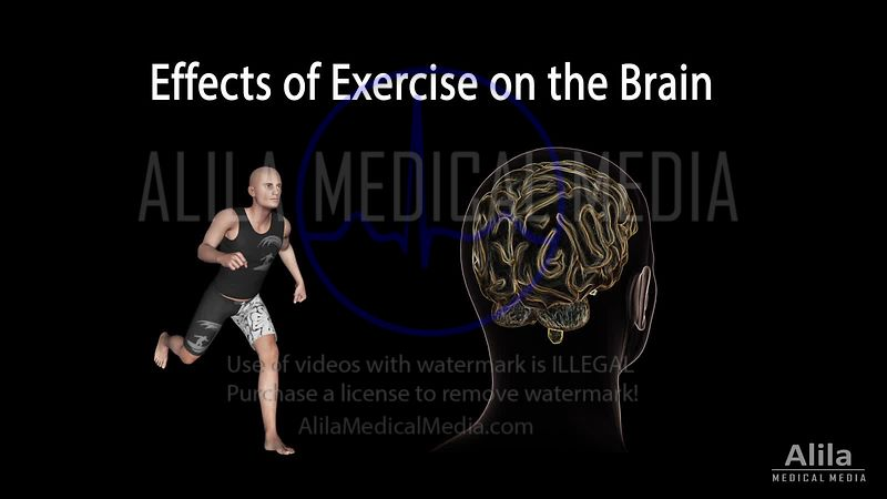 Effects of exercise on the brain NARRATED animation