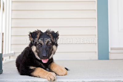 Puppy waiting at front door