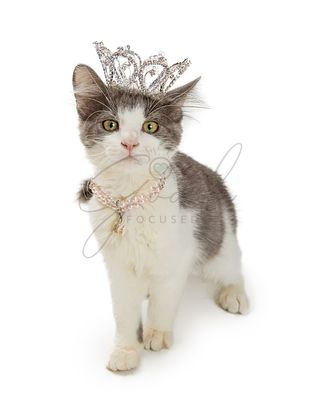 Kitten Wearing Crown and Pearl Necklace