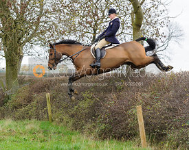 Gaby Cooke jumping the drop hedge at Ladywood - The Cottesmore Hunt at Ranksboro, 26-11-13.