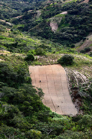 Newly made terraces ready for planting coca , Yungas region , Bolivia