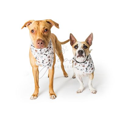 Large and Small Dogs Wearing Bandanas