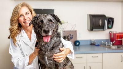 Female Veterinarian With Dog in Office