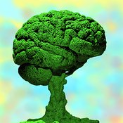 Bonsai Brain 1