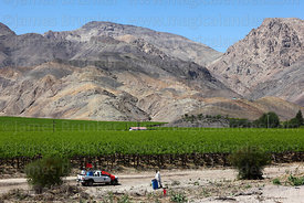 Officials testing the quality of irrigation water for vineyards, Copiapó Valley, Region III, Chile