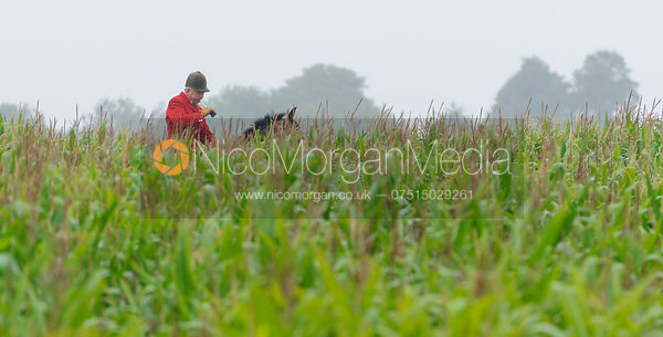 Cottesmore Huntsman Andrew Osborne MFH in  a maize field - The Cottesmore Hunt at Tongue End 28/8