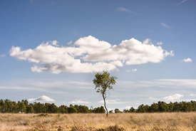 Lone tree with cloud