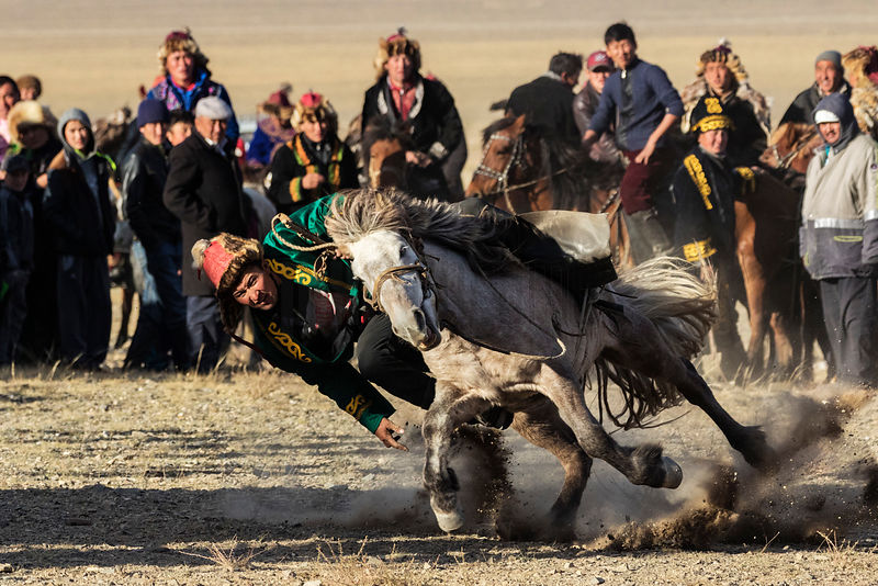 Mongolian Eagle Hunter Playing Traditional Horse Game Tengge Elou
