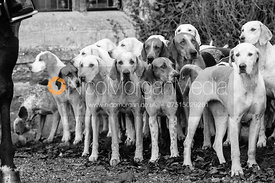 Quorn hounds at the meet at Ingarsby Hall 27/10