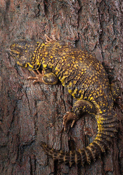 Lizard on tree bark