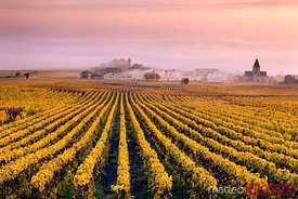 Vineyards in the mist, Champagne Ardenne, France