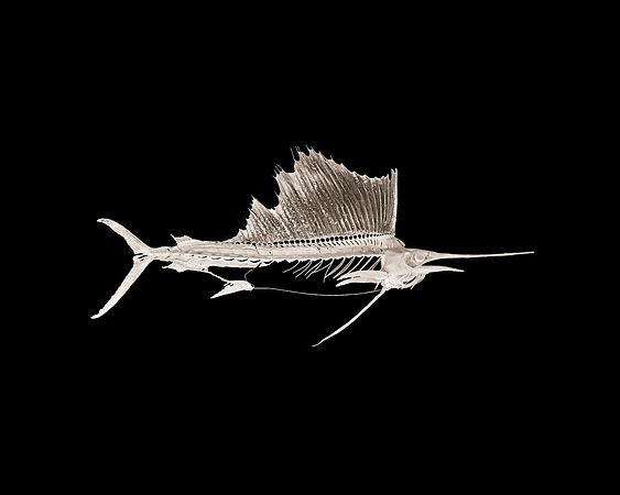 fish rencontre