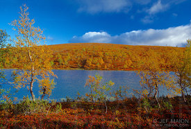 Lake and forest in warm fall colors against intense blue sky