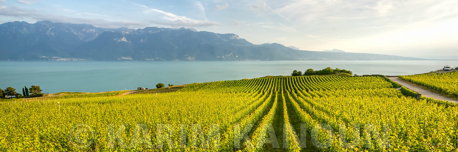 Lines of green vineyards with Lac Léman - Lavaux wineries