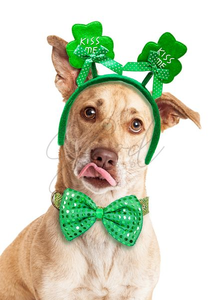 Funny Kissing St. Patrick's Day Dog