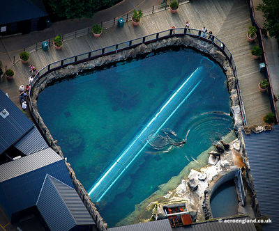 aerial photograph of Sealions at  Colchester Zoo Essex   England UK.