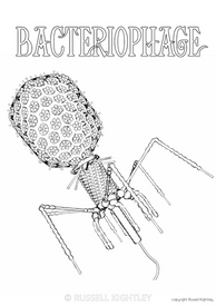 Bacteriophage T4 Colouring In