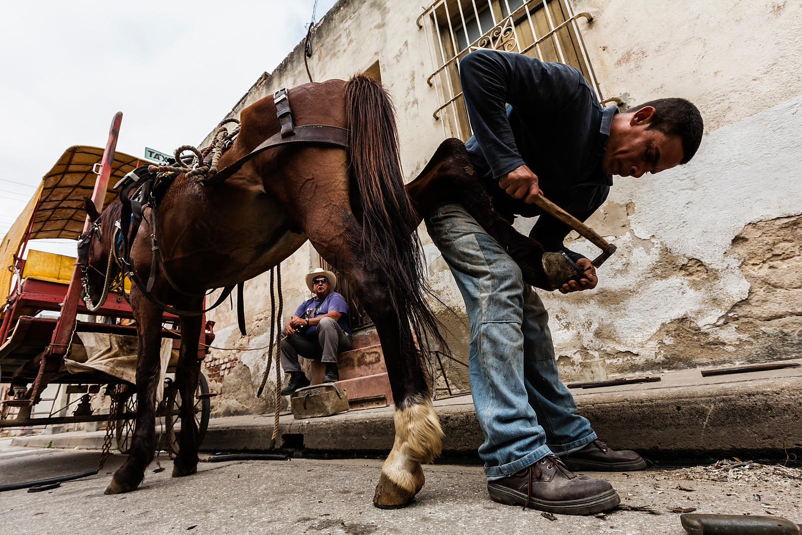 Farrier Nailing New Horseshoe onto Horse's Hoof