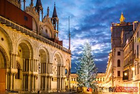Christmas tree in St Marks square, Venice