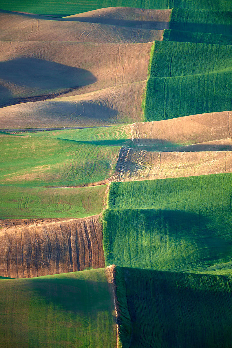 Waves of Fields