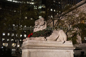New York Public Library Lion, NYC