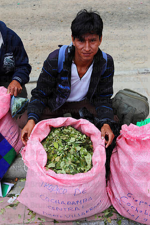 Coca grower from Chaparé region with coca leaves ( Erythroxylum coca ) at an event promoting traditional uses of the coca leaf , La Paz , Bolivia