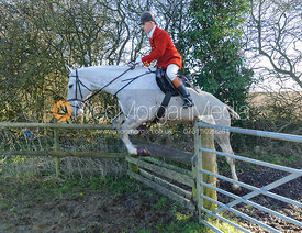 Robert Medcalf jumping a hunt jump near Knossington Spinney - The Cottesmore at Furze Hill.