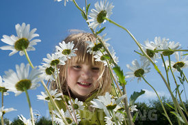 Young girl in field of Ox-eye Daisies North Norfolk summer - Model Released.