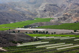 Vineyards and netting to protect vines from wind, Copiapó Valley, Region III, Chile
