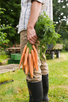 Man holding bunch of carrots, low section, close-up