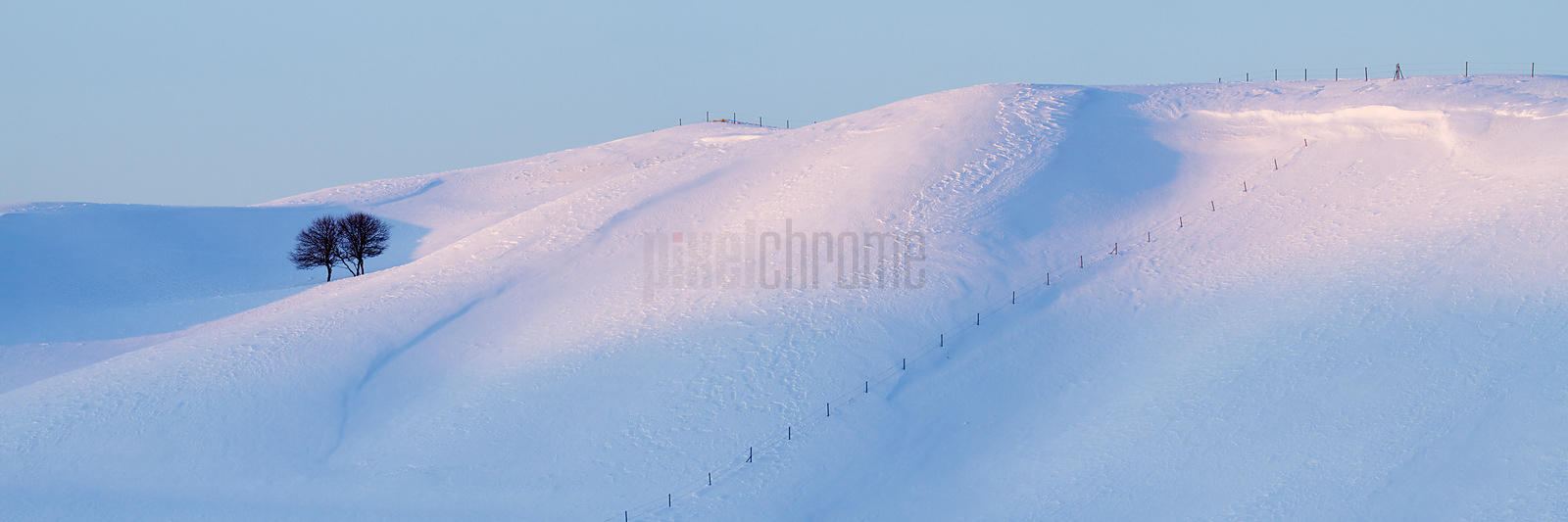 Lone Trees on a Snowy Landscape