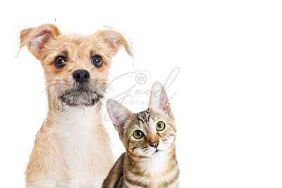Cute Kitten and Puppy Closeup on White With Copy Space