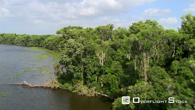 Flight above treetops along a widening Florida river