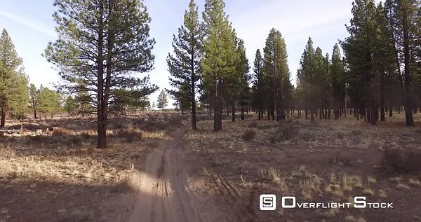 Dirt bike riding on desert trail through trees and sage brush. Bend Oregon
