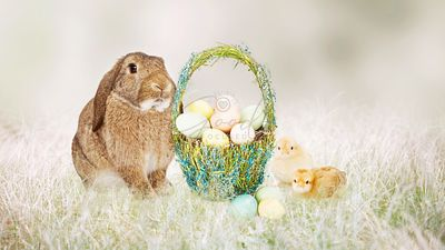 Easter Bunny and Chicks With Basket of Eggs