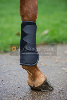 Tack and equine equipment Equestrian Stock Images