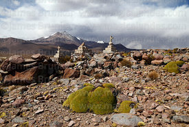 Stone cairns with crosses on hilltop and yareta plants (Azorella compacta), Guallatiri volcano in background, Las Vicuñas National Reserve, Region XV, Chile