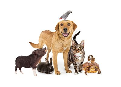 Group of Domestic Pets Together on White