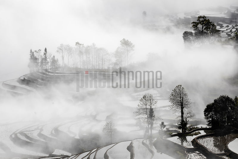 View of Duo Yi Shu Rice Paddies in the Yuanyang Region