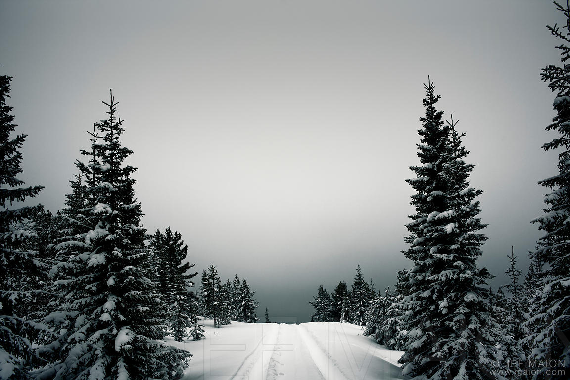 Snow-capped road in winter forest