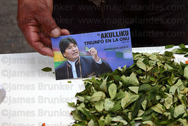 Leaflet with president Evo Morales and coca leaves ( Erythroxylum coca ) at an event to celebrate Bolivia rejoining the 1961 UN Convention , La Paz , Bolivia