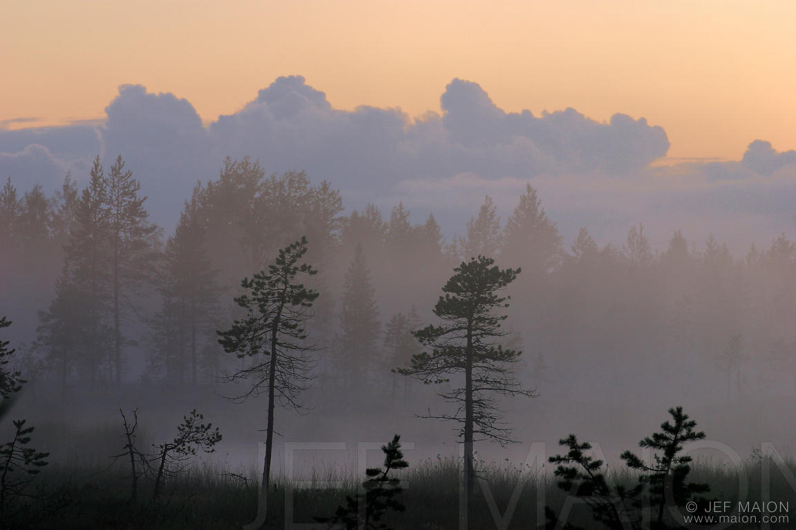 Mist over a bog at dusk