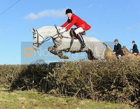 Nicholas Leeming MFH jumping a hedge near Knossington Spinney - The Cottesmore at Furze Hill.