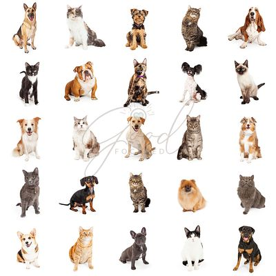 Repeating Pattern of Cats and Dogs